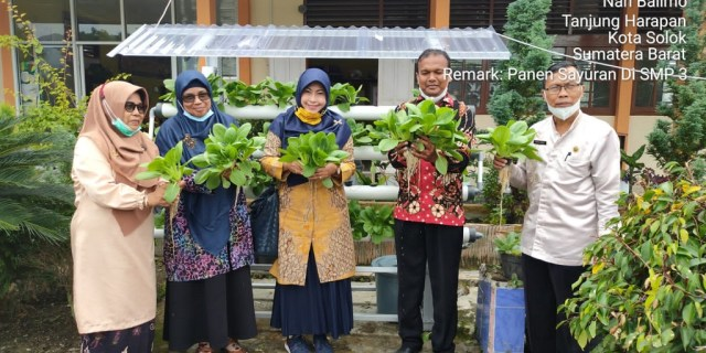 Panen Perdana Tanimas di SMP 3 Kota Solok