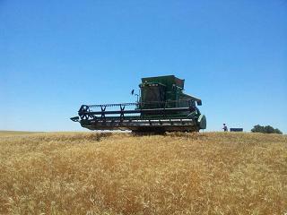 cosechadora1 cereal