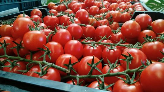 Tomate IMG-20151210-WA0027.jpg
