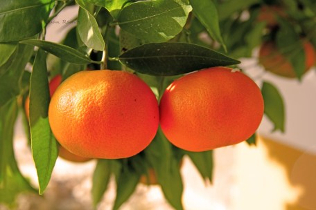 citricos IMG_1914.jpg