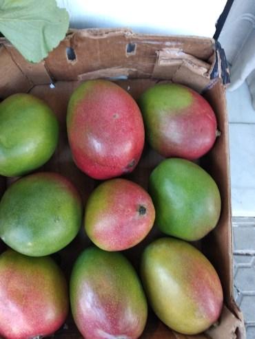 mango IMG_20200210_094908