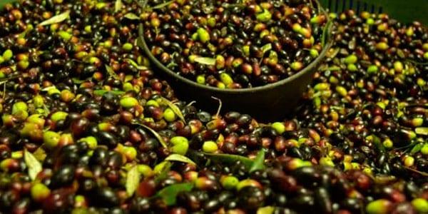aceite de oliva expoliva 2019 en jaén