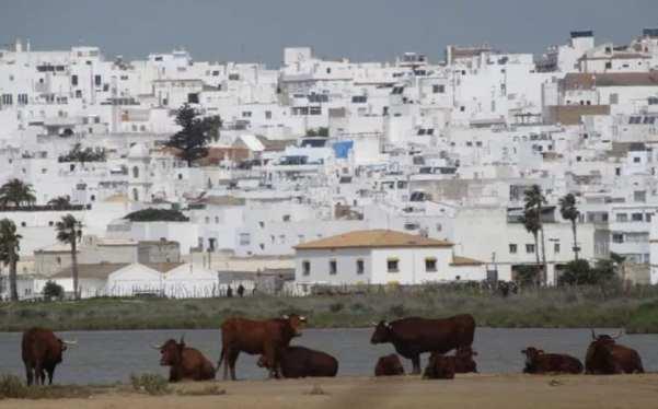 vacas pueblo