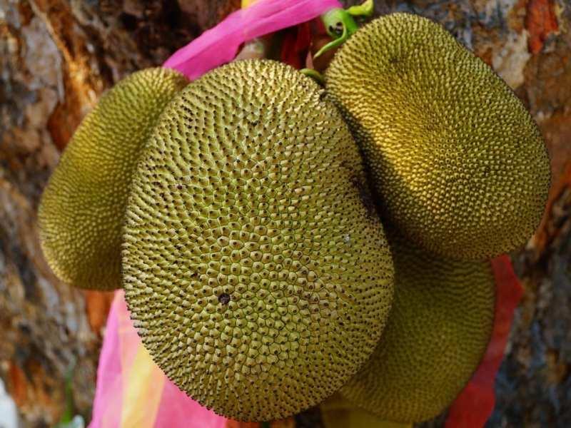 jackfruit sabor a cerdo