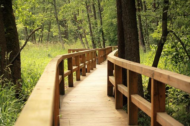 puente de madera accesible dentro de la selva