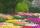 Tirocini all'estero di primavera