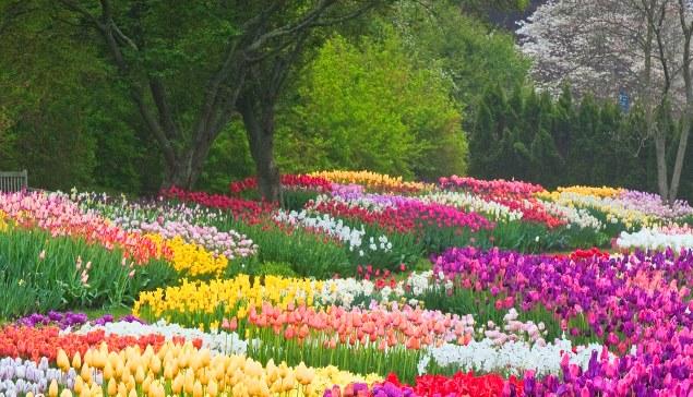 tirocini estero primavera