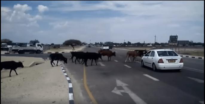 Stray animal situation untenable