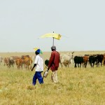 Initiatives introduced to assist drought stricken farmers