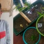 Another dagga farmer arrested