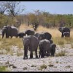 A herd of elephants occupies boreholes in Omusati