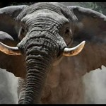 Greed blamed for killing of iconic elephant