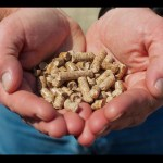 Biomass could be utilised as a fuel source