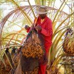 Desert Fruit finds new export markets