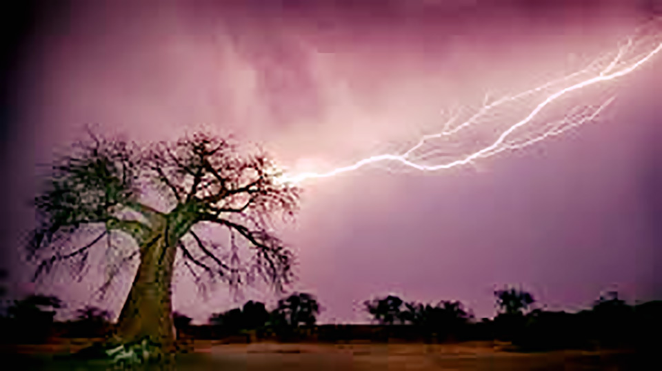 lightning died struck field