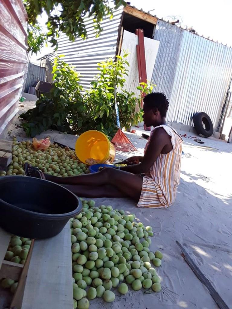 Omagongo season marula fruits