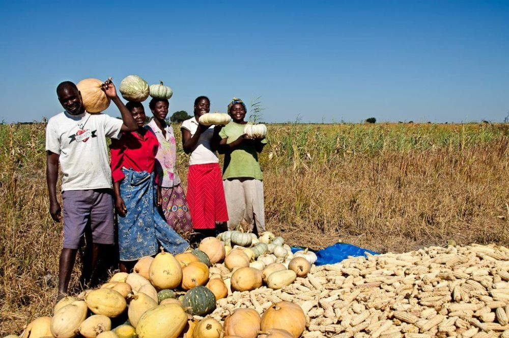 Bumper crop harvest recorded country households agricultural produce
