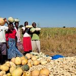 Bumper crop harvest recorded in the country