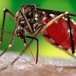 Namibia records 40 malaria related deaths