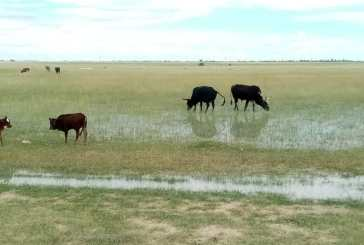 Good rains will continue in the North