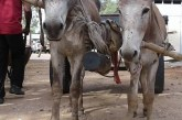 Child dies after donkey cart falls on top of her