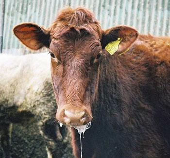FMD Zambezi Veterinary Agriculture outbreak Foot Mouth Disease