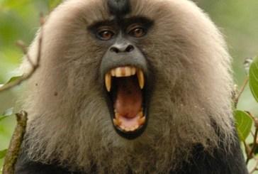 Deadly monkey virus kills one in China