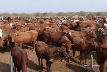 FMD outbreak hits Zambezi
