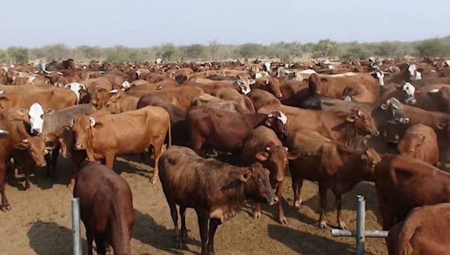 Zambezi Veterinary Services Ministry Agriculture Water Land Reform outbreak Foot Mouth Disease FMD Zambezi