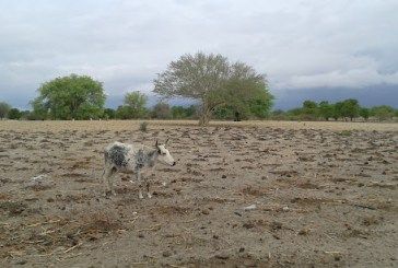 Namibia urged to adopt extensive global warming strategies