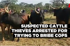 Suspected cattle thieves arrested for trying to bribe cops
