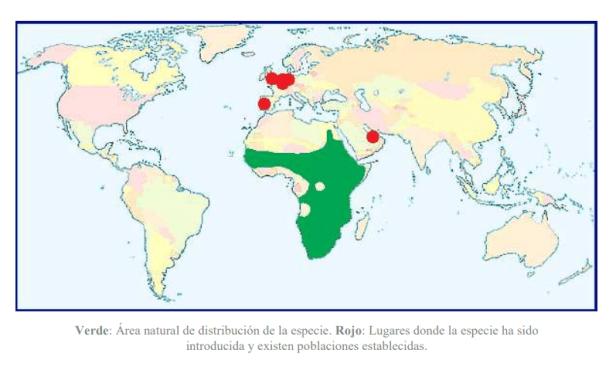 Distribución mundial ganso del Nilo