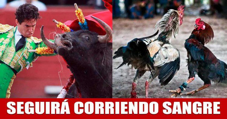 Tribunal Constitucional declara constitucional corrida de toros y pelea de gallos | VIDEO