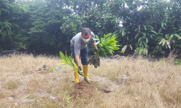 Prefectura realiza restauración forestal en Puerto Limón
