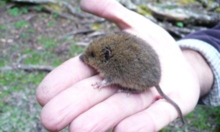 Estudio detalla la fauna de micromamíferos del cuaternario tardío