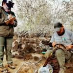 36 tortugas de la Isla San Cristóbal regresan a su hábitat natural