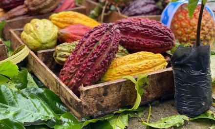 """Productores Cacaoteros podrán participar en el """"Concurso Cacao de Excelencia Ecuador 2020"""""""