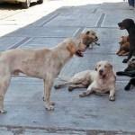 Emergencia por muerte violenta de animales de compañía en Quito