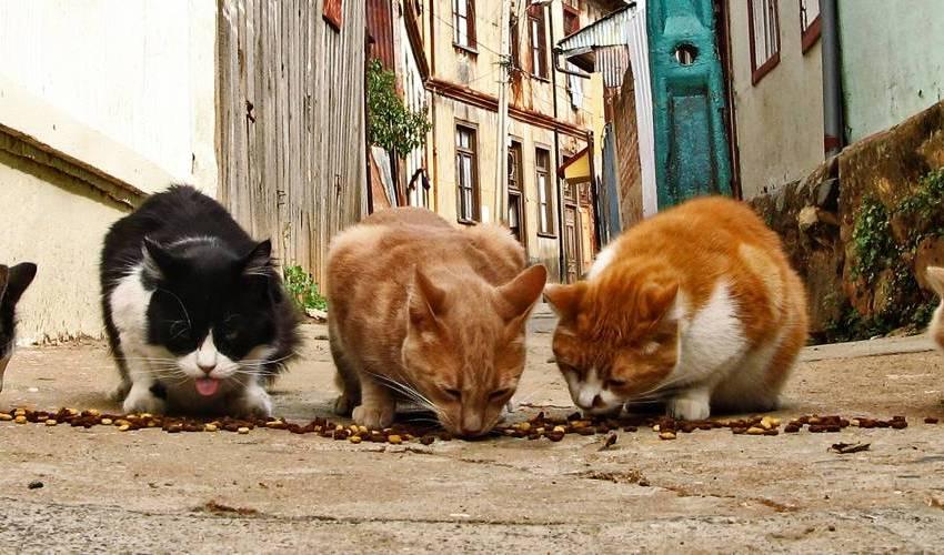 Gatos com hábitos de sair sozinho: saiba como agir!