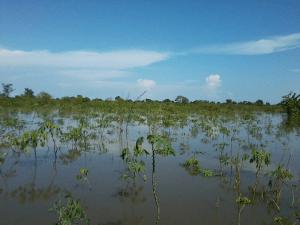 file: flooded farmland