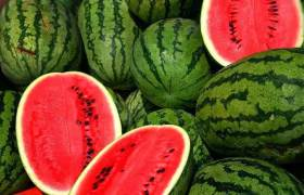 How to Start a Profitable Watermelon Business in Nigeria