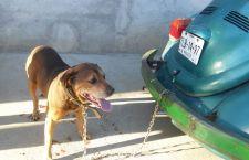 1er detenido en Oaxaca por flagrancia en maltrato animal; arrastraba con su auto a un perro ya sangrante de las extremidades