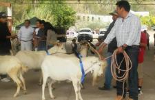 Combaten la pobreza con crianza de chivo en la Mixteca