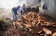 Oaxaca con los bosques más talados del país y grupos armados tienen el control de puntos de saqueo