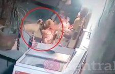 VIDEO: Un perro entra a una tienda en Puebla; escoge un oso de peluche, se lo roba y huye con él