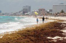 Descarta UMAR llegada del sargazo a playas de Oaxaca