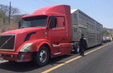 En complicidad, aparentemente robó tractocamión que transportaba ganado; fue vinculado a proceso | Informativo 6y7