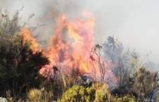 Incendios forestales han consumido 40 mil hectáreas en Oaxaca