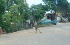 Abandonan vehículo a punto de volcar en la carretera a Mariscala   Informativo 6 y 7