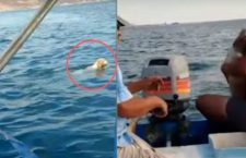#VIDEO | Pescadores mexicanos encuentran a un perrito en medio del mar y lo rescatan